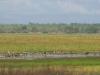 Wetlands - Kakadu National Park