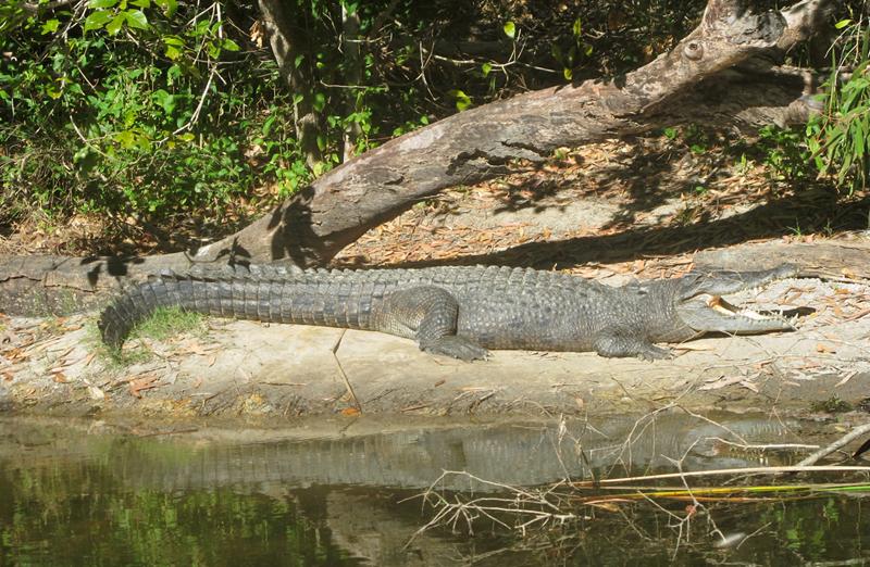 Croc - Artleys Crocodile Adventures
