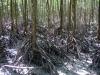 Mangrove Cairns