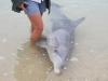 Dolphin feeding - Monkey Mia