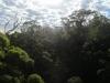 Tree Top Walk - Pemberton