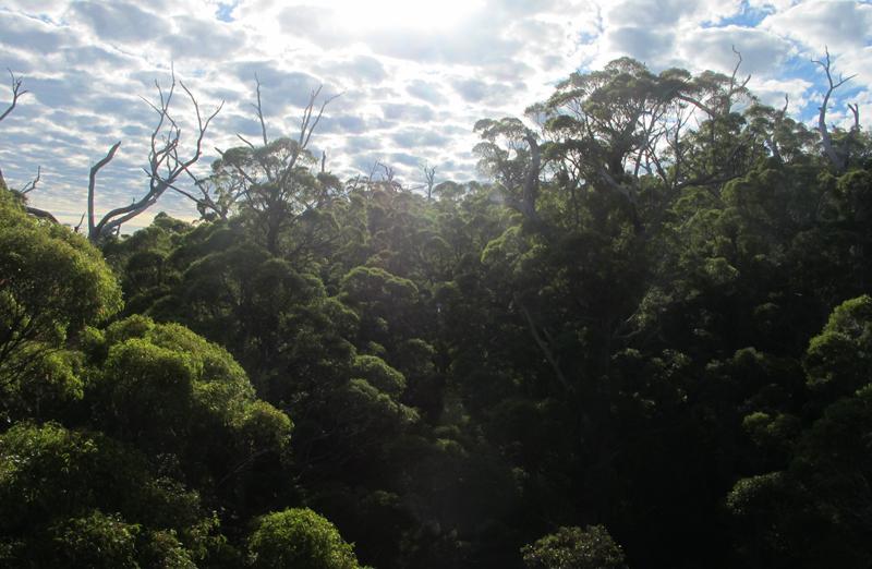 photos d u0026 39 australie