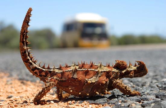 Weird Animals Of Australia 1