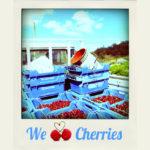 Fruit Picking : bonne expérience de picking de cerises à Adelaide Hills