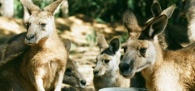 Blog Australie