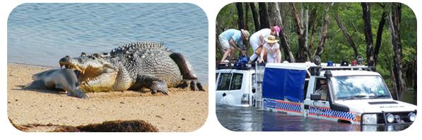 crocodiles-australie-dangers