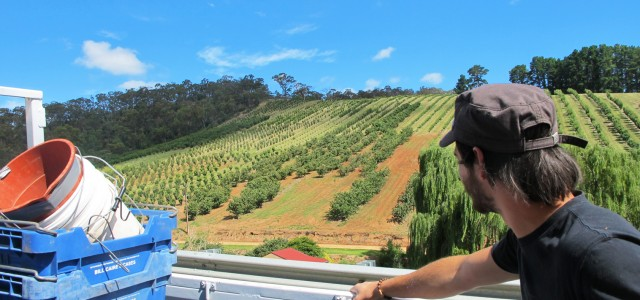 Le Fruit Picking en Australie