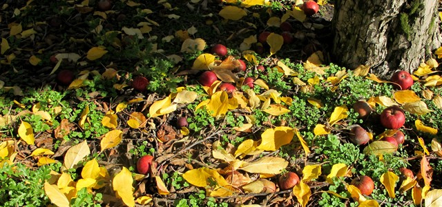 Saisons Fruit Picking – Calendrier des récoltes