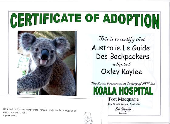 certificat d u0026 39 adoption koala australie