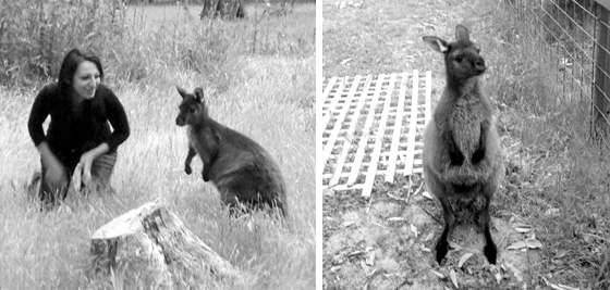 Woofing kangaroo island 3 australie
