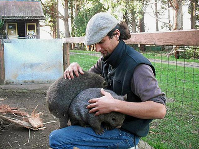 Le Wombat Faune Australienne