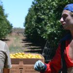 Fruit Picking en Australie : Oranges à Waikerie