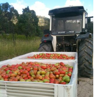 Queensland fruit picking Australie backpackers