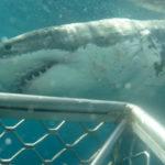 Western Australia, capitale mondiale des attaques de requins