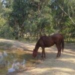 Travailler avec des chevaux en Australie