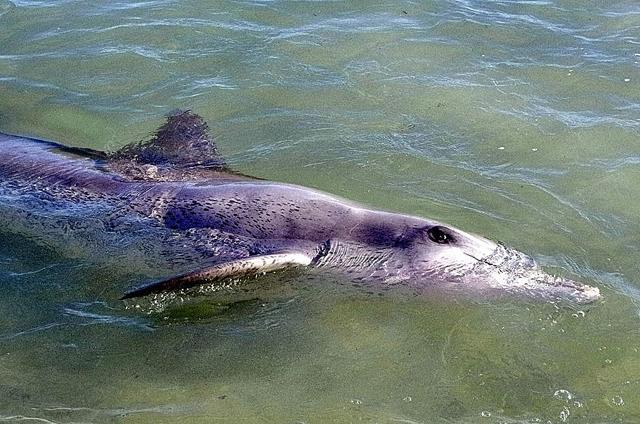 rencontre dauphins monkey mia australie