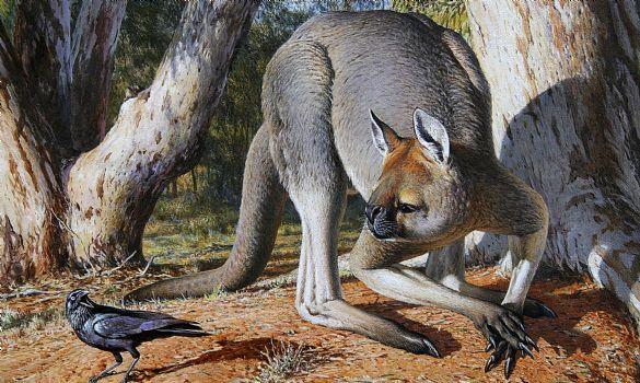 Kangourou géant Australie Mega faune