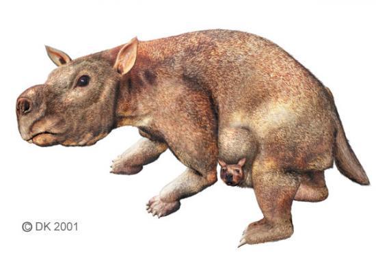Wombat géant Diprotodon Australie