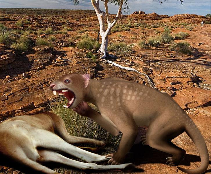 Lion Marsupial Australie Géant mega faune