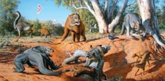Mega fauna australia giants animals