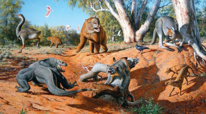 Mega fauna australia giants animals