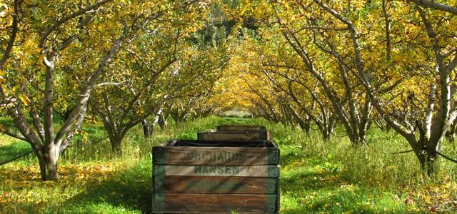 fruit picking en australie   arnaques  d u00e9rives et bon plans