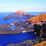 Phillip Island, l'îles aux pingouins