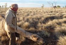 Homme dromadaires outback Australie
