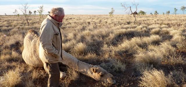 Rencontre insolite dans le désert australien