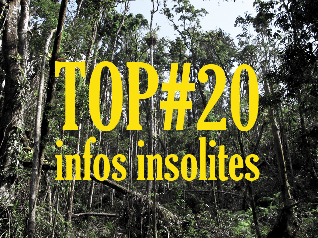 infos insolites Australie buzz