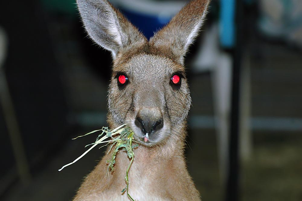 20 bonnes raisons de ne pas partir en australie