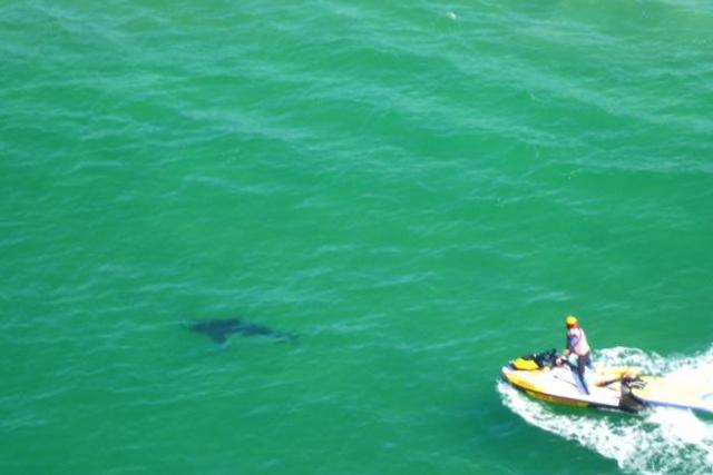 Attaque requin Australie Byron Bay
