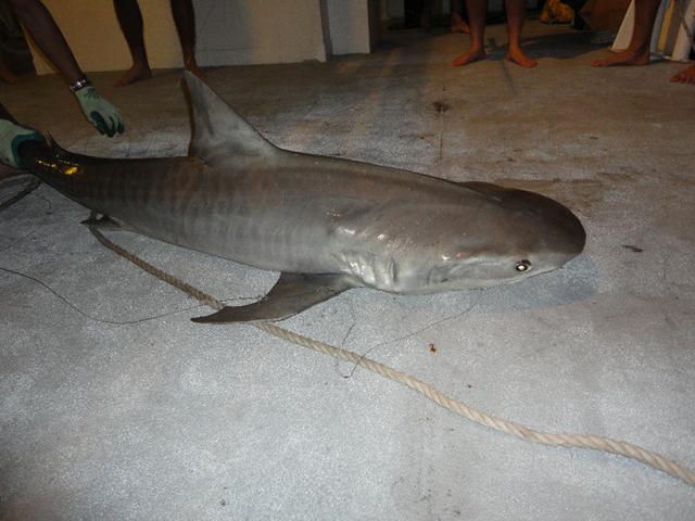 job requin australie bateau peche