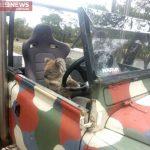 Un écolier australien surprend un koala au volant d'une voiture!