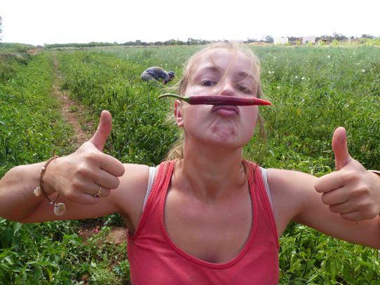 fruit picking  u00e0 carnarvon   4 mois de r u00e9coltes pour gwen