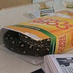 Australie : un habitant de Sydney découvre un python dans sa boîte de céréales
