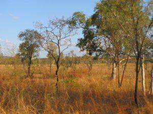 bush australie outback