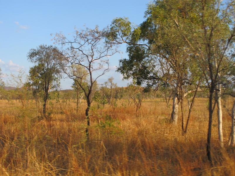 bush australie