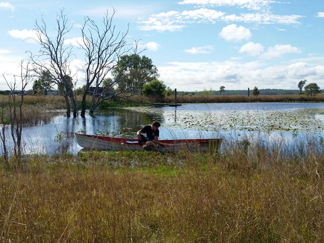 Sauver Kangourou Australie 2