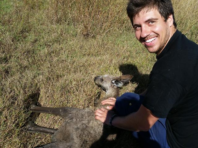 Sauver Kangourou Australie 3