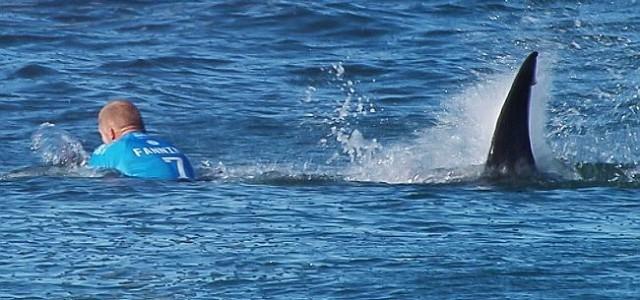 Un surfer australien attaqué par un requin en direct