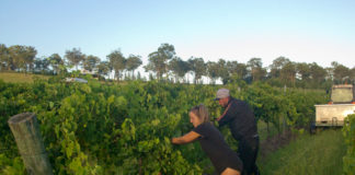 Fruit picking australie