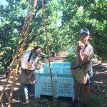 Expérience de picking de Myrtilles en Australie