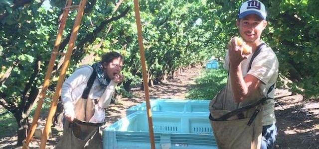 exp u00e9rience de picking de myrtilles en australie