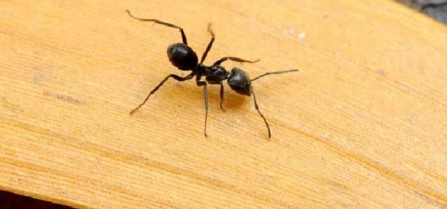Un Australien survit dans l'Outback en mangeant des fourmis