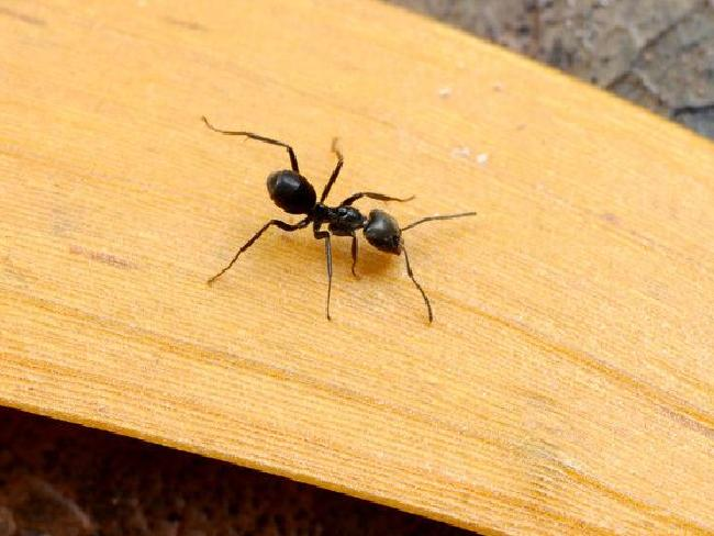 un australien survit dans l u0026 39 outback en mangeant des fourmis