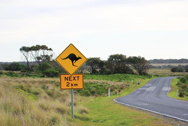 sauveteur animaux australie 12