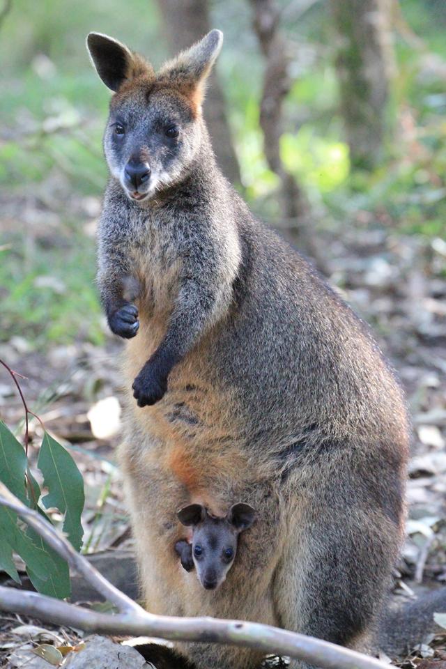 sauveteur animaux australie 4