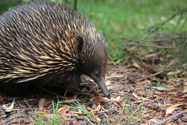 sauveteur animaux australie 7