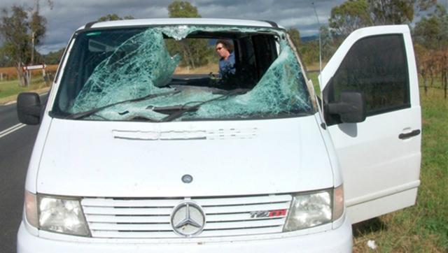accident kangourou australie